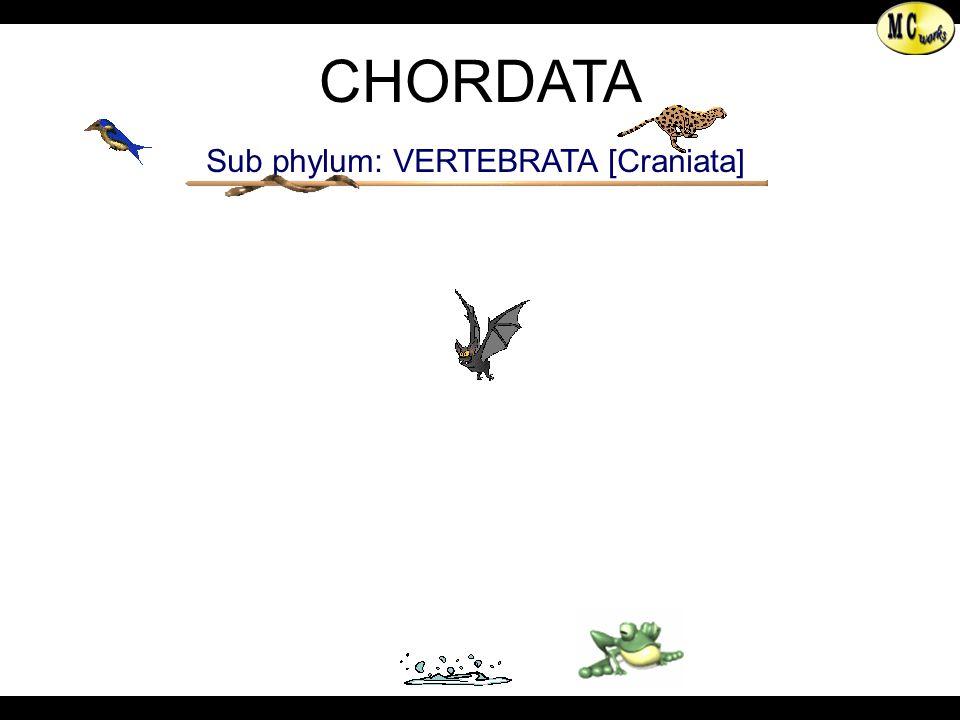 Sub phylum: VERTEBRATA [Craniata]